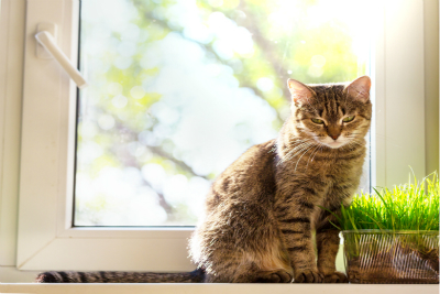 Controlling Litter Box Odor in Small Spaces | Blog