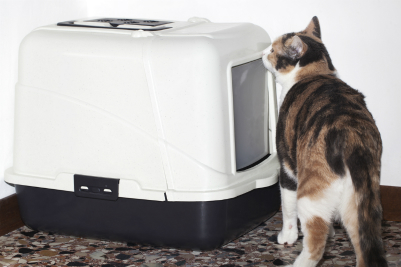 controlling litter box odor